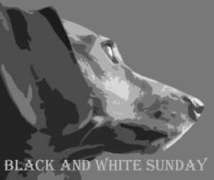 Black & White Sunday Blog Hop