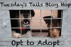Tuesdays Tails Blog Hop