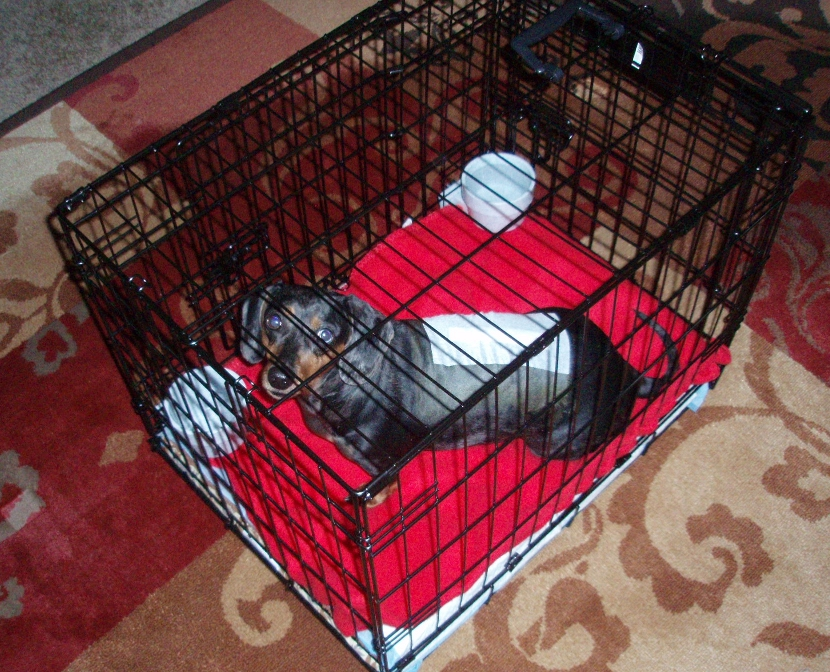 Li'l Girl in Crate After Surgery