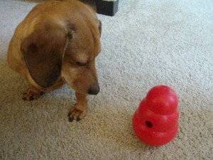 Austin With Kong Wobbler