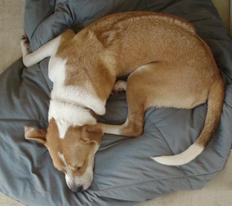 Gracie - Sleeping