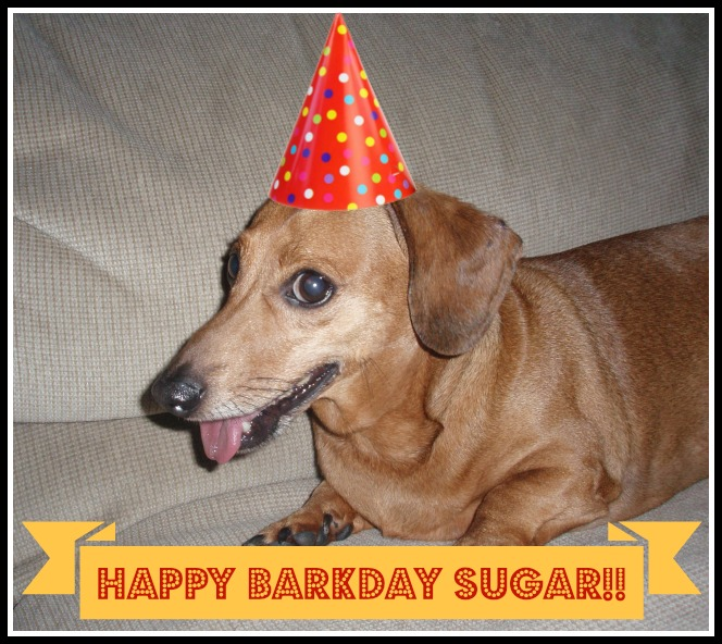 Happy 12th BarkDay Sugar!!