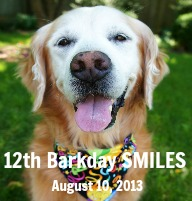 Sugar's 12th BarkDay Blog Hop