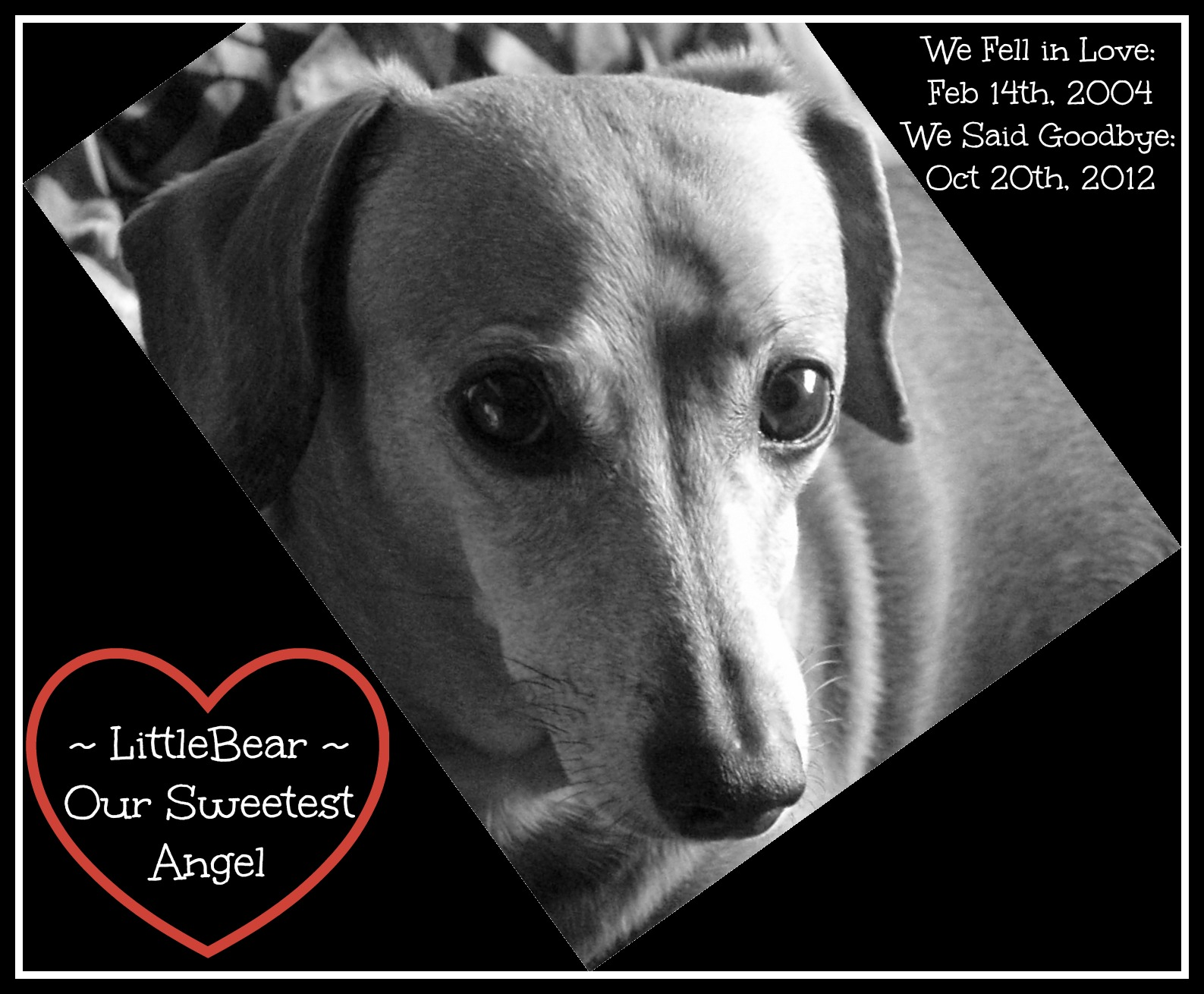 LittleBear - We Miss You More Than Words Can Say